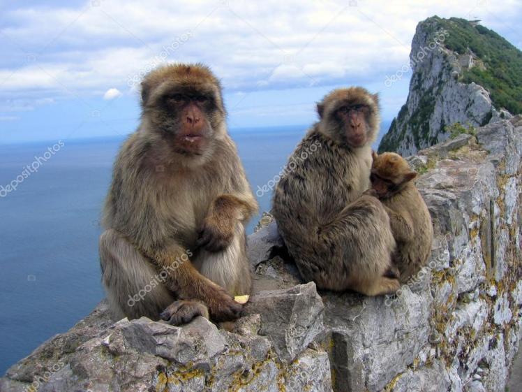 depositphotos_3860461-stock-photo-family-of-barbary-monkeys-in