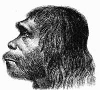 199px-Neanderthaler_Fund