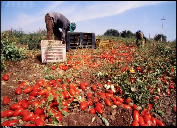 22soc1-immigrati-raccolta-pomodori-foto-michele-dottavio