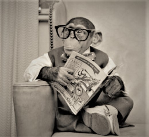 scimmia_intellettuale a