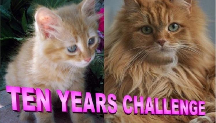 ten-years-challenge