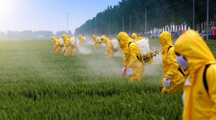 I-Pesticidi-800x445